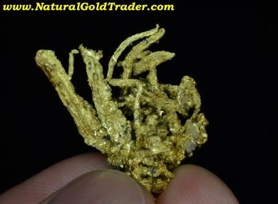 Kennedy Mine California High Grade Gold Specimen