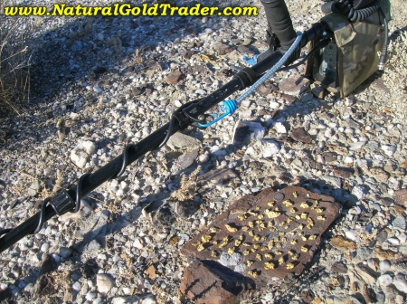 Gold Nugget Hunting with a Metal Detector