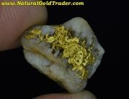 2.93 Gram Boise Basin Idaho Gold & Quartz