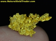 2.24 G. Round Mountain Nevada Gold Specimen