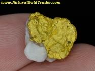 5.18 Gram Sonora Mexico Gold & Quartz