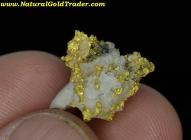 4.77 Gram Scotland Gold & Quartz Specimen