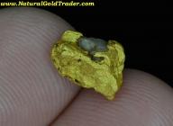 1.46 G. Gold Basin AZ. Gold Nugget w-Quartz