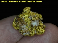 12.82 Gram Folsom CA. Gold Nugget with Quartz