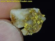 1.34 Gram Oregon Gold & Quartz Specimen